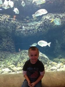 Ben aquarium